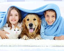 Choosi Pet Insurance.