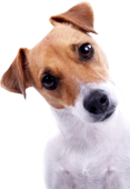 Pet Insurance Comparisons Online.