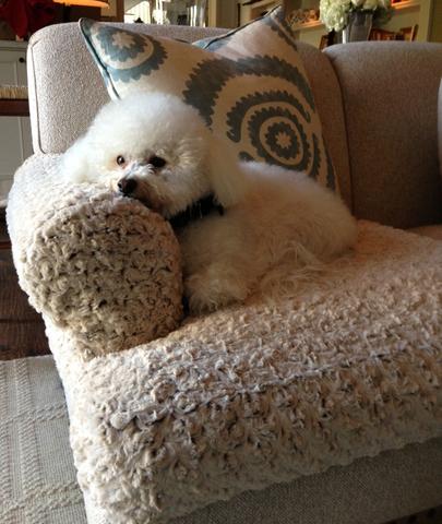 Dog Sofa Slipcover Corner