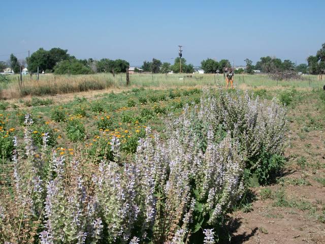 Lily Organics Farm