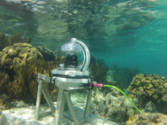 Underwater webcam in Grand Cayman