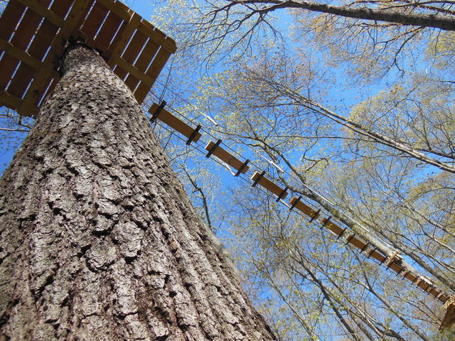 """Look up!"" The Adventure Park at Storrs consists of different platforms in the trees connected by challenge bridges or zip lines. Five different courses to choose from. (photo by Anthony Wellman)"