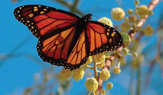 Annual Child Safety Event and Monarch Butterfly Release July 27, 2013 at Abington Senior High School