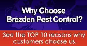 """Need residential pest control? Brezden Pest Control is known as the """"Property Owner's favorite"""" for their comprehensive San Luis Obispo pest control services."""