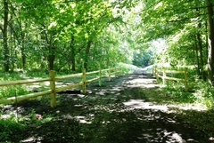 Section of the Rail Trail at Williams Lake