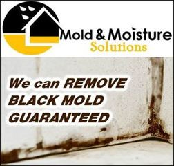 Mold & Moisture Solutions Selected as the Preferred Provider for Long & Foster and Coldwell Banker