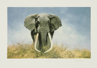 Articulate Fine Art Adds More Wildlife Prints by David Shepherd