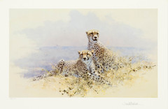Cheetah, Wildlife of the World Series