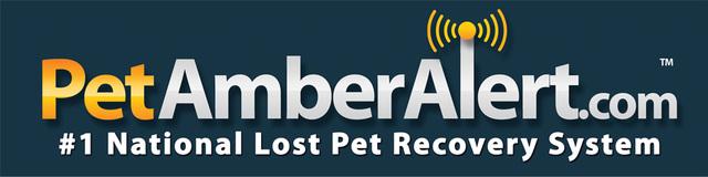 lost dog finder