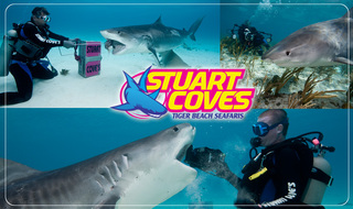 Stuart Cove is proud to announce the opening of his newest boutique dive operation offering dives with Tiger Sharks