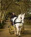A new role for work horses in the recycling process on Sark