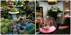 Find an iron urn with cattail puffs and hanging terrariums with air plants at Mahonia.