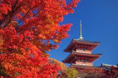 Japan vacation specials