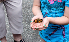 A young girl holds a butterfly that her family released together