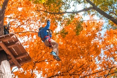 What better way to enjoy autumn foliage than to zip line through it at The Adventure Park at Nashville