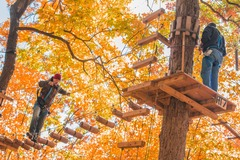Enjoying autumn foliage UP IN the trees themselves at The Adventure Park.