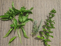 River City Wellness provides herbal therapy to help restore health and balance to their patients.