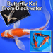 Blackwater Creek  is the leading producer of high quality butterfly koi.
