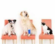 Choosi Pet Insurance Comparison