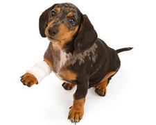 Pet Insurance Australia.
