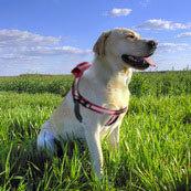 GPS Dog Tracking Harness