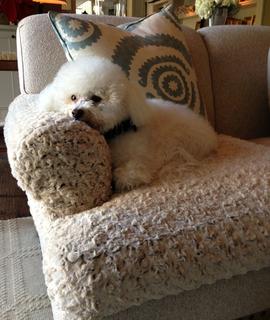 Malibu Interior Designer Creates Unique Solution For Snuggle Happy Sofa Dogs