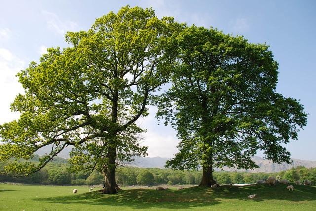 Go Paperless on Arbor Day