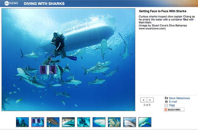 Stuart Cove's Dive Bahamas on ABCNews.com