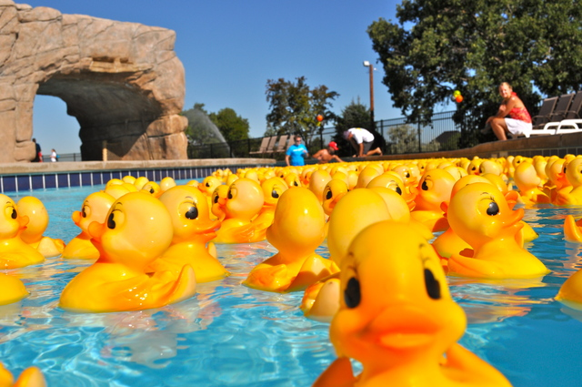 Rubber Ducky Derby