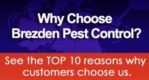 Call Brezden Pest Control in San Luis Obispo, CA at (805) 544-9446 for all your pest control problems.