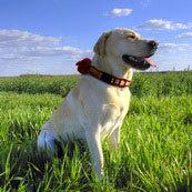 Love My Pets GPS - Reflective GPS Dog Collar