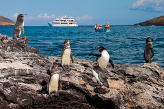 Expedition cruise on board the Galapagos Grand Odyssey
