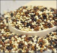 Quinoa - Tri-color