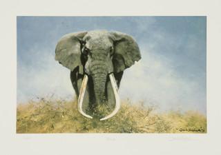 Articulate Fine Art Adds More Wildlife Prints by David Shepherd