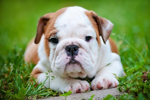 Air Scrubber Plus Reduces Pet Odors