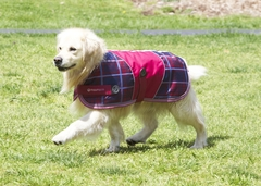 World's Finest Dog Coats Online