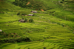 Vietnam travel with Sapa