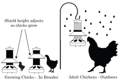 BriteTap Chick Feeder - The Cleaner Feeder That Grows with Your Flock