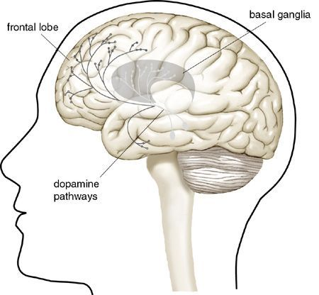 Dopamine directly affects fundamental roles in normal brain activity