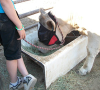 My Horse Specialties Masks are comfortable and allow animals full range of activities