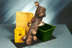 14 inch log with tray