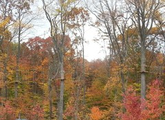Take leaf peeping to new heights by climbing and zip lining through the colorful autumn canopy at The Adventure Park. (Photo: Outdoor Ventures)