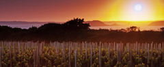 Witness some of Europe's most beautiful sunrises that rise over Sark's vineyards and light up the Channel Islands