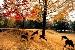Kyoto Deer Park