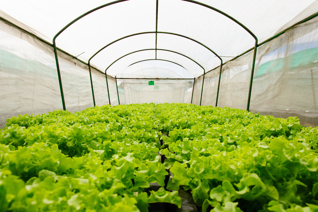 Koolfog is on the cutting edge of fog system technology in shade houses to control temperature and increase the growing season.