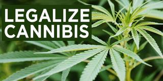 Shop Insurance Canada Says Next Wave Insurance To Insure Marijuana In Canada