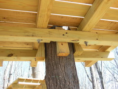 Tree platforms in Adventure Parks built by Outdoor Ventures are constructed to be tree-friendly. Support is provided by adjustable wedges. (Photo: Outdoor Ventures)