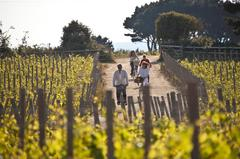 Hire a bicycle and take a bike ride through Sark's beautiful vineyards