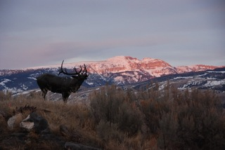 Jackson Hole's New Outdoor Sculpture Trail at the National Museum of Wildlife Art Plans Festive Summer Schedule of …