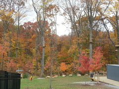 "Autumn at The Adventure Park at The Discovery Museum. October is a"" great time for a climb!"""